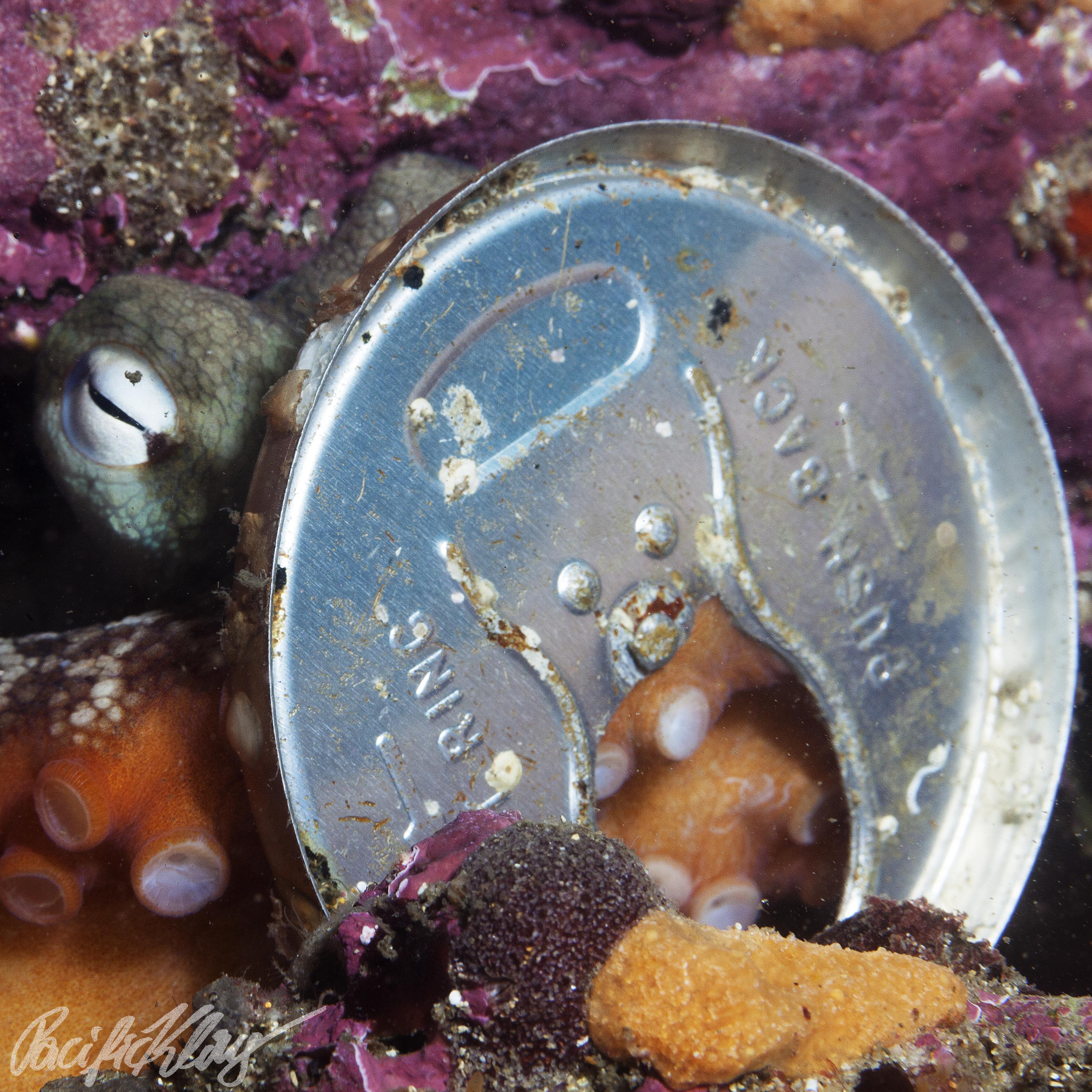 An invertebrate in the aluminum-age.