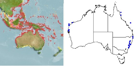 Distribution heat map for the robust ghost pipefish from Fishbase on the left, point map for collected specimen of this fish from the Australia museum on the right.
