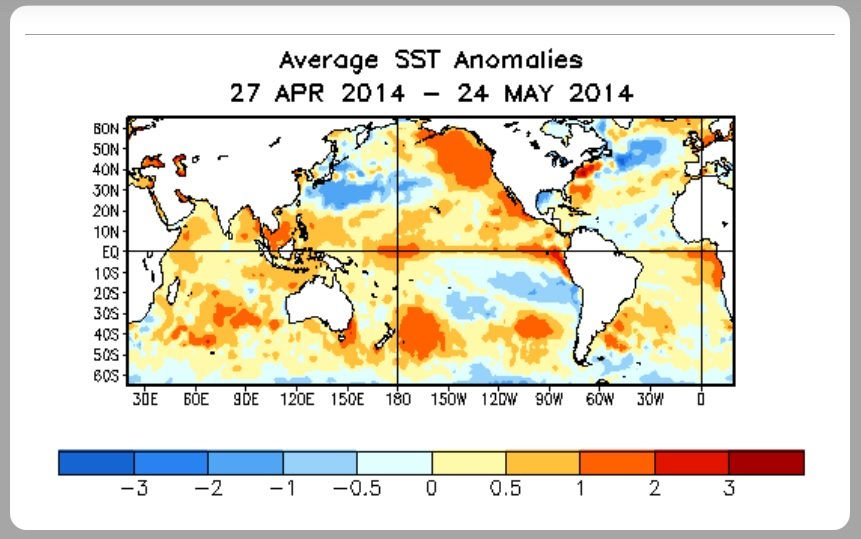 Sea surface temperature anomalies, image by NOAA.